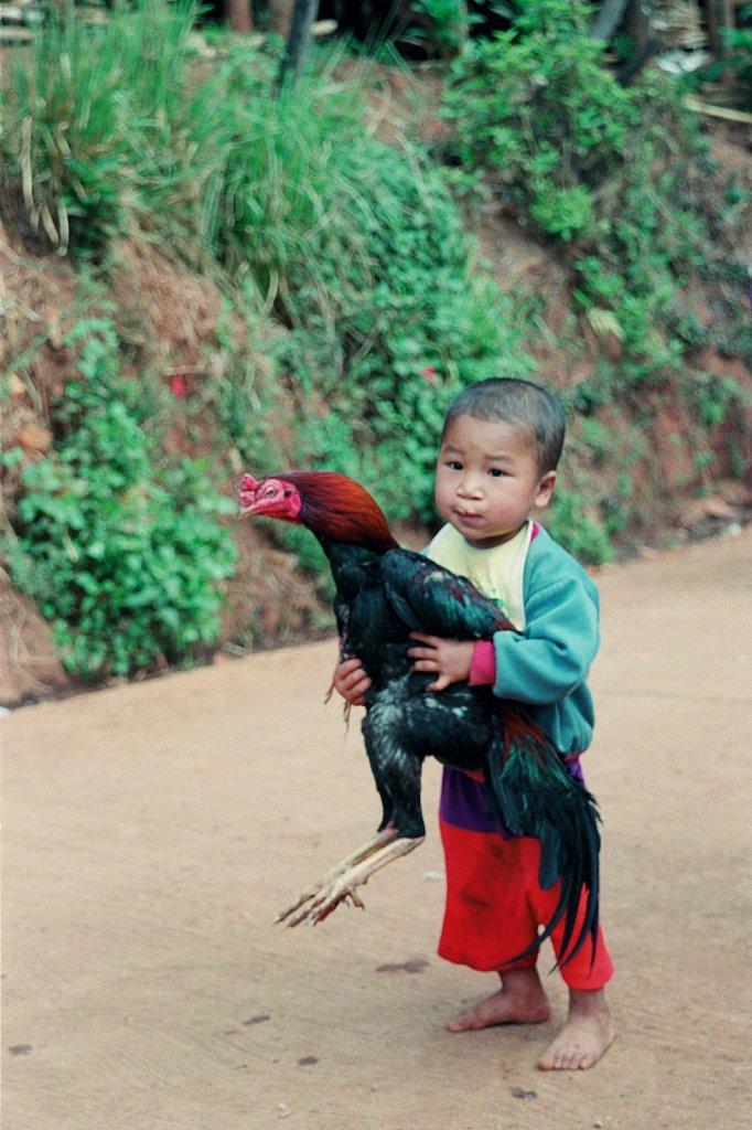 Boy & hen-Thailand