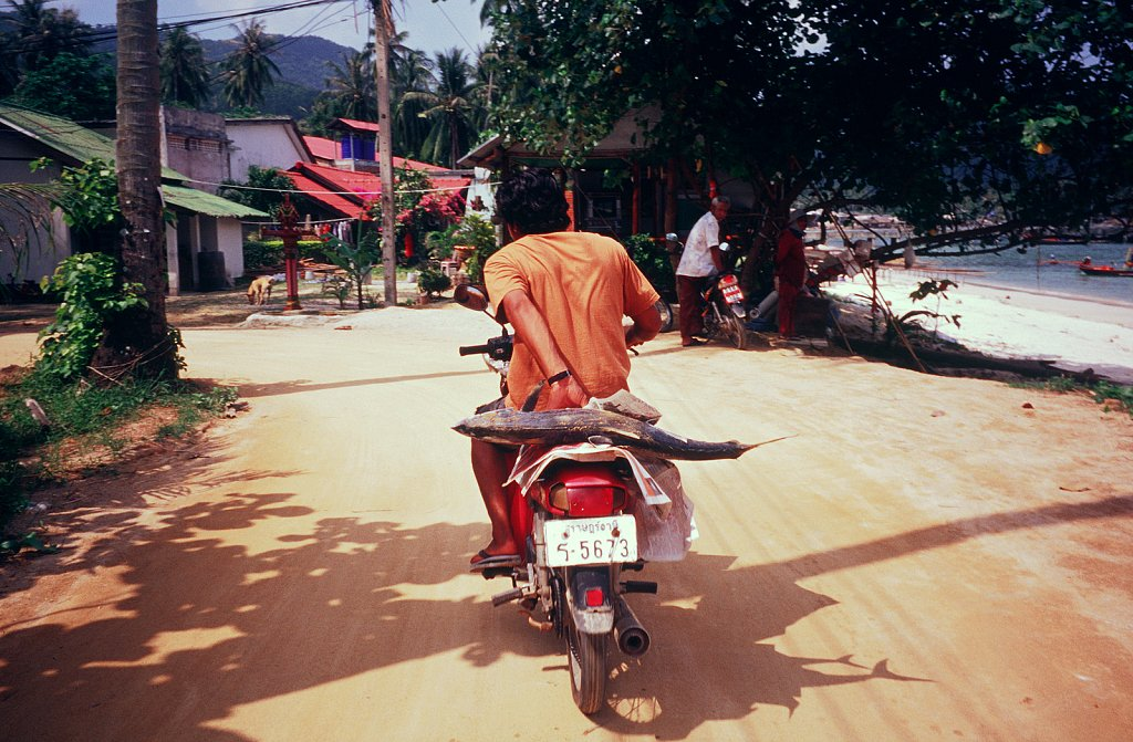 Fish-on-a-bike-Thailand